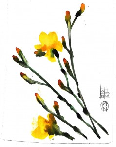 fiori flowers acquerello watercolors stella ehinar (1)