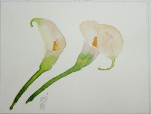 fiori flowers acquerello watercolors stella ehinar (4)